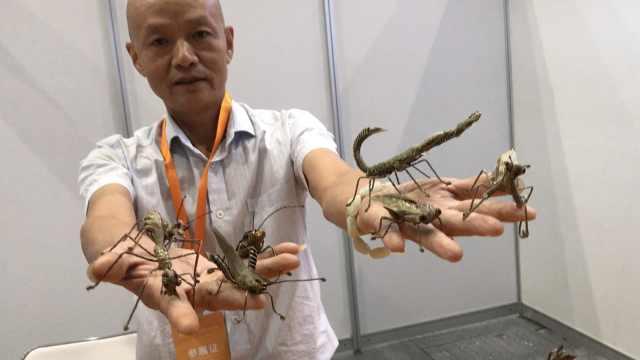 指尖技艺!棕编传承人能编百种昆虫