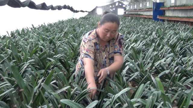 农妇转型种大棚花:太忙没时间花钱
