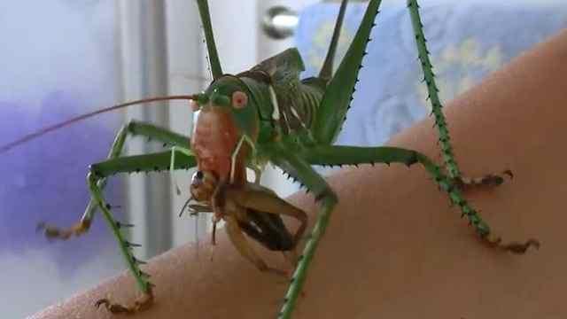 5个奇特的昆虫!
