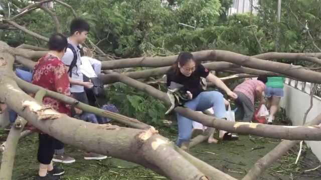 台风过后,广东人上班画风是这样的