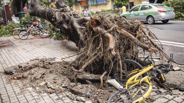 台风山竹过后,扛单车钻树枝去上班