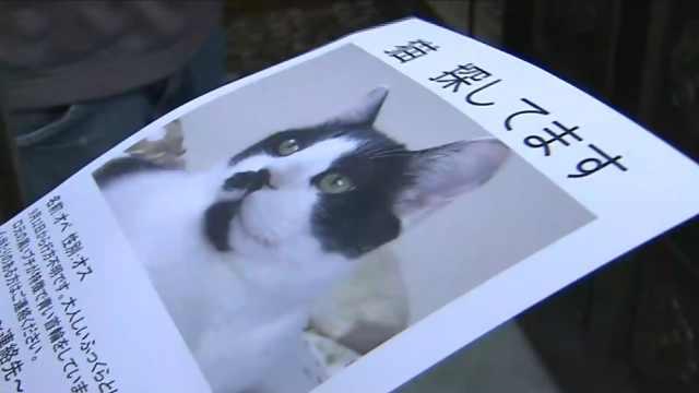 超暖!日本组织帮找回地震走失宠物