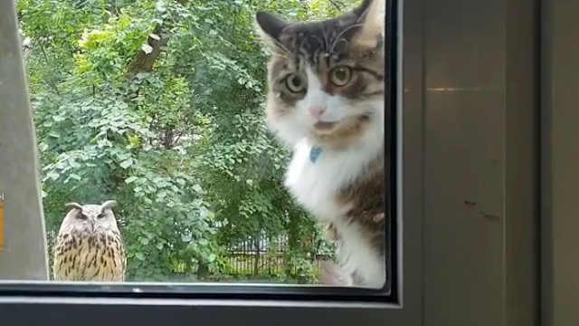 猫:你瞅啥?!还不快放朕进去!