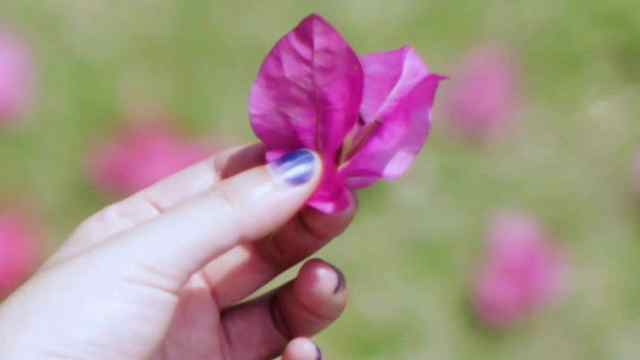 草木染 | 向自然借来的颜色