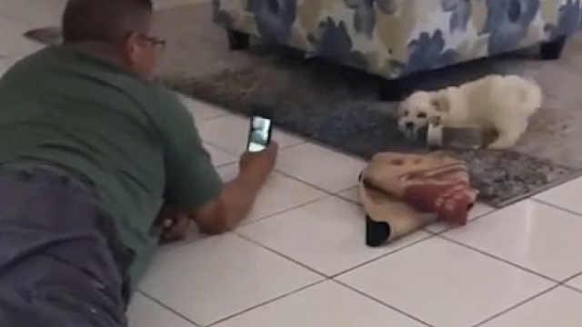 爸爸:不准养狗,不准把狗带回家
