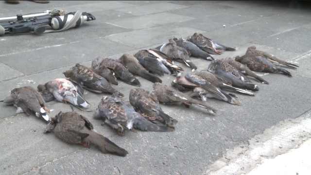 4人用气枪猎杀21只斑鸠,或领刑3年