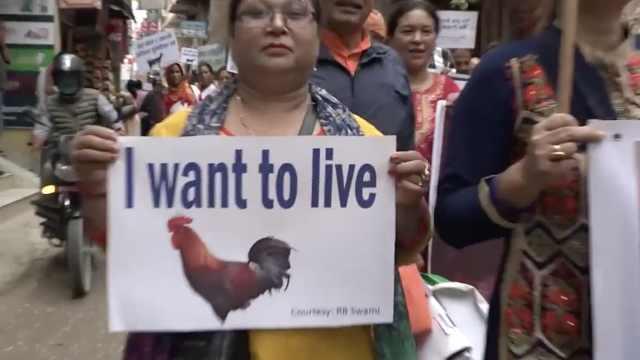 尼泊尔民众抗议残忍虐杀动物祭祀