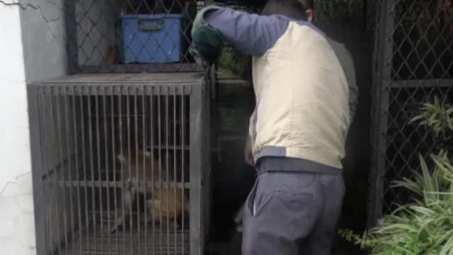 父亲救助受伤猕猴,去世后儿子接力