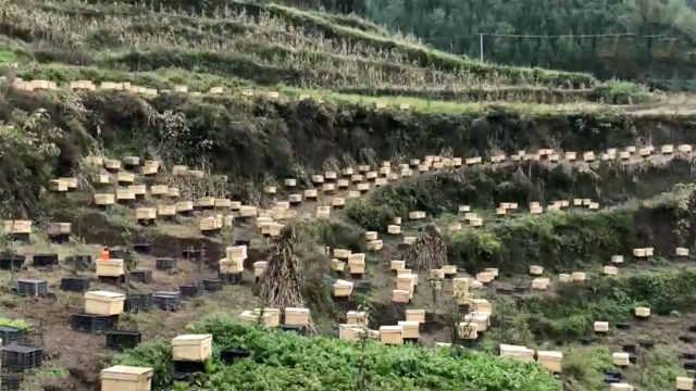 大方县对江镇打造精准扶贫蜜蜂工程