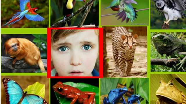 研究:1970年后60%动物因人类灭绝