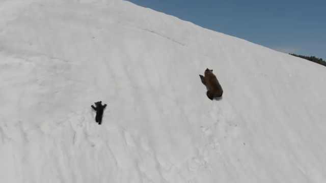 无人机拍小熊爬雪山,被网友谴责