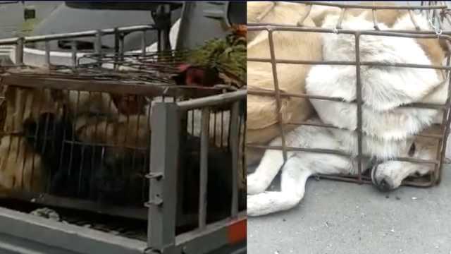 60条狗强塞小车,狗贩被拦当众撒泼