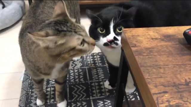 猫咪成了网红,居然是因为会念咒语