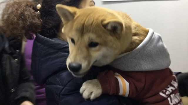 哈尔滨1户限养1只犬,市民扎堆办证