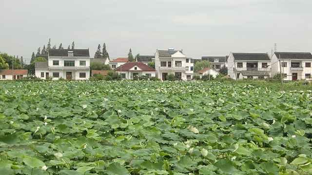 看美丽乡村庆改革开放:上海张马村