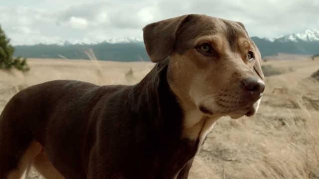 治愈系!一只狗狗温暖你的冬天