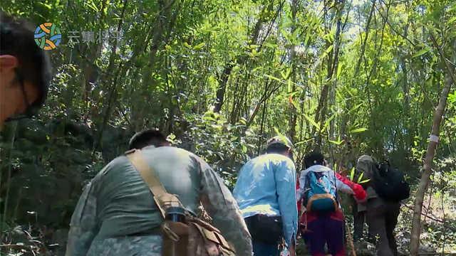 为寻营地,真人秀团队涉险攀爬山顶