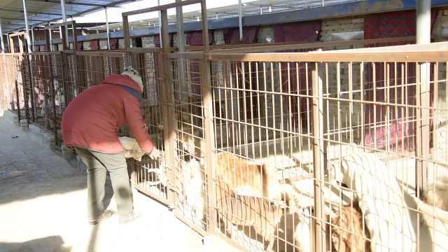 大妈17年养400只流浪狗:赔了一套房