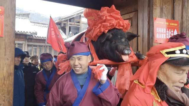四大汉抬猪王巡街,乡长:这是增收节