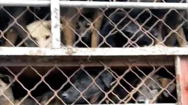 爱狗人士拦车救400狗,他找到自家狗