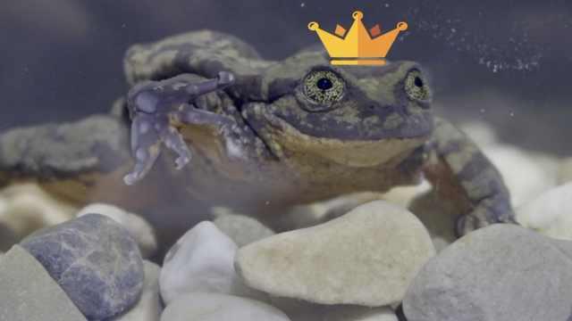 单身10年,最孤独水蛙终于找到对象