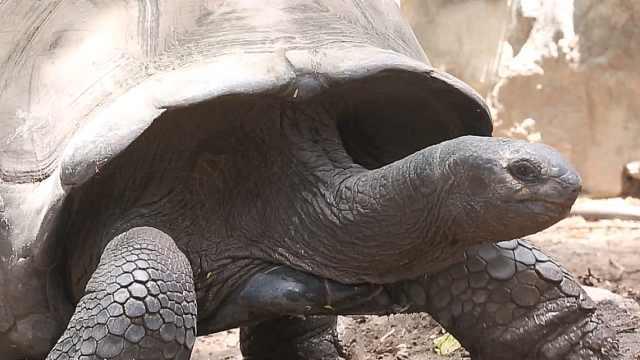 探秘塞舌尔岛上1.5亿年历史的生物