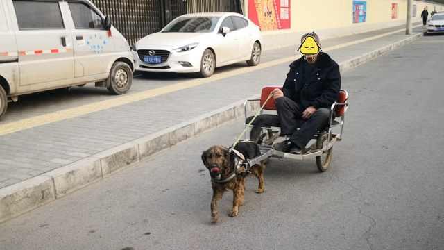 140斤大爷坐狗拉车逛街:宝马也不换