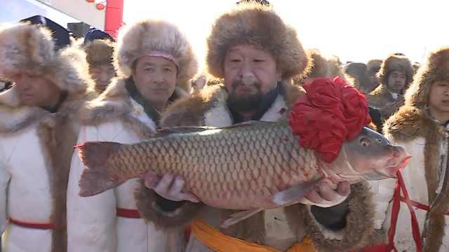 新疆冬捕节,37斤头鱼拍出399999元