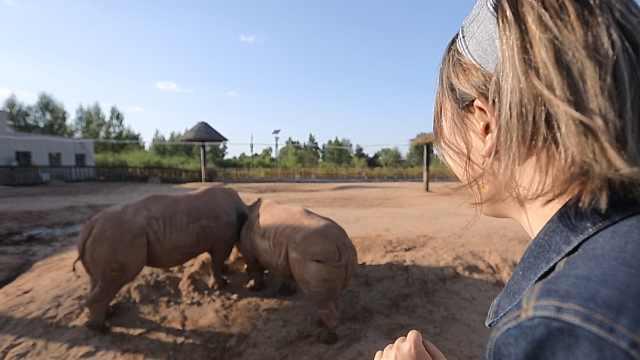 鄂尔多斯见证稀有动物:白犀牛宝宝