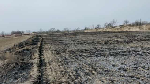 村民14亩柴胡除夕被烧:上坟引燃的