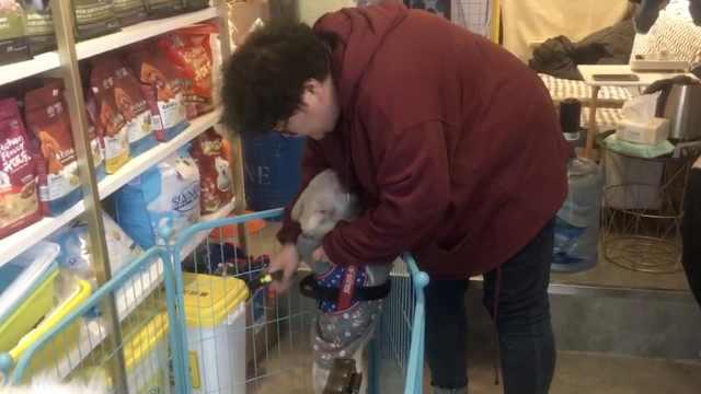 为躲父母催婚,她10年春节与狗过年