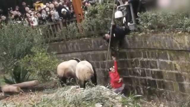 惊险一幕!小女孩掉落大熊猫饲养池