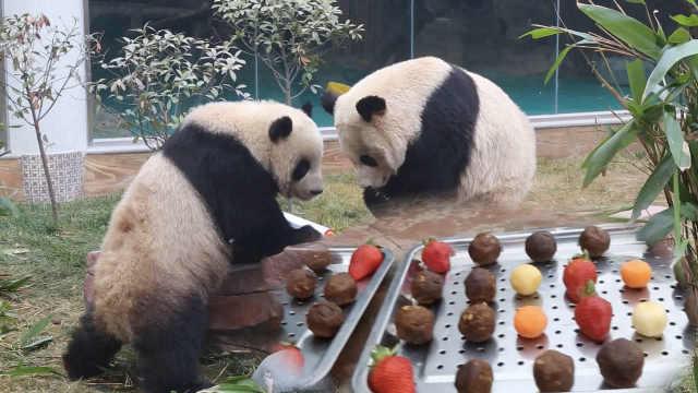 熊猫过节吃五彩