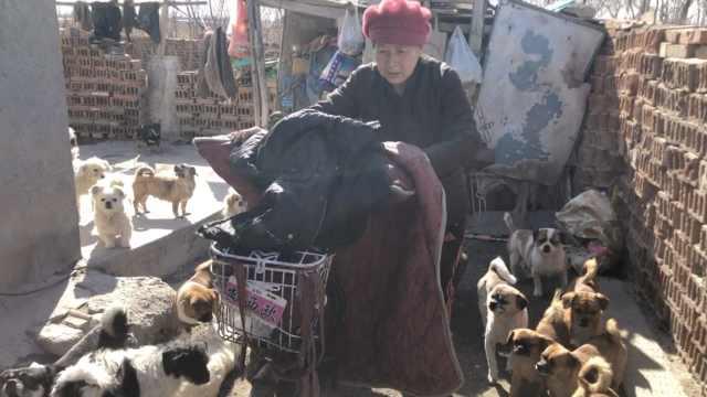 老妇租房收养55条流浪狗:看着可怜