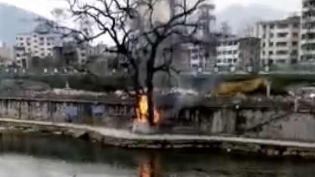 600年古树遭纵火,全身输液治疗中