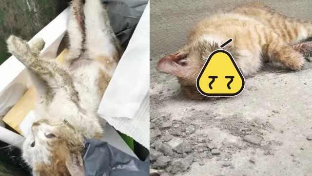 1周死2只!男子领养猫后被质疑虐猫