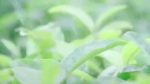 微信卖茶骗局频发