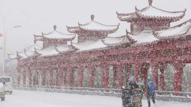 新疆突降春雪,小城一夜白头回寒冬