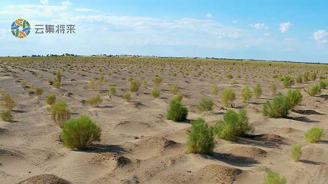 为改善生态,他在沙漠种5000亩植被