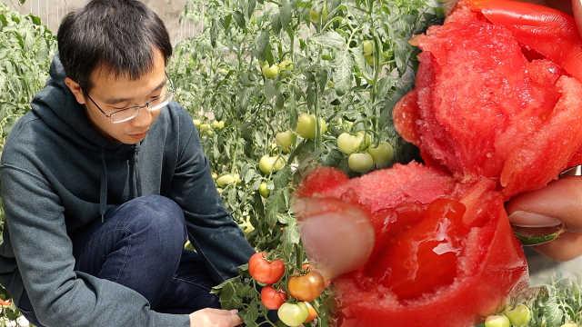 大学生回乡开网店卖菜,年入2千万