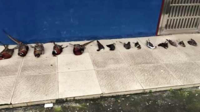 持气枪猎杀14只鸟,4人非法狩猎被拘