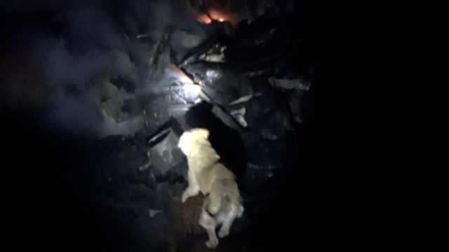 30多只狗火场遇难,同伴嗅望不离去