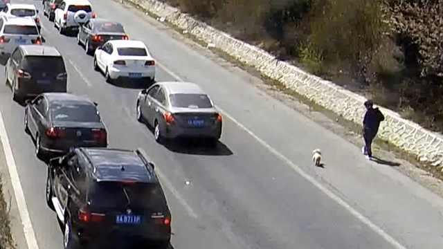 五一高速大堵车,女子应急车道遛狗