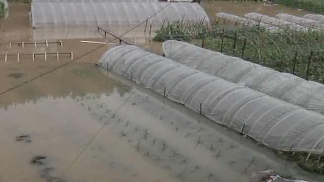 黄山持续暴雨,河水上涨农田被淹