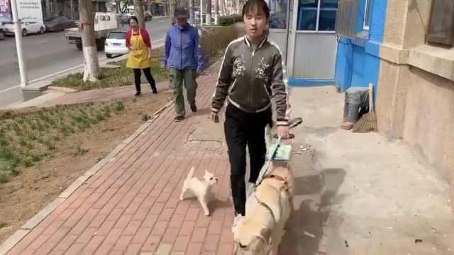 合肥首只导盲犬被拒载,当事人发声
