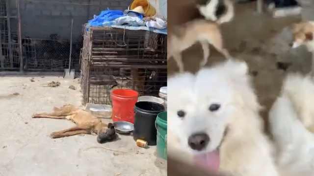 爱狗人士堵收狗点:狗贩偷狗还虐狗