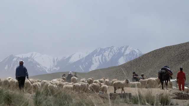 壮观!牧民赶羊夏季转场,每年迁3次