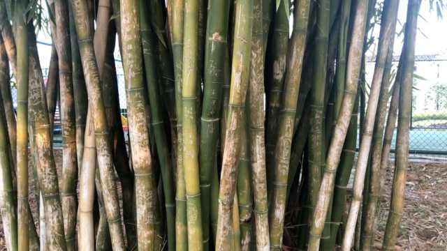 4A景区竹林遭毁容,一根竹刻数十字