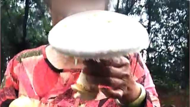 大妈采食野蘑菇肾衰竭,抢救2天2夜