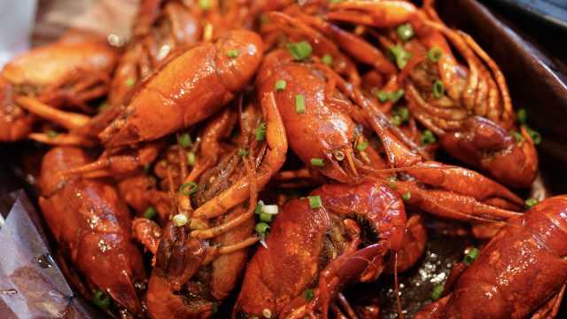 龙虾协会副会长辟谣小龙虾繁殖力强